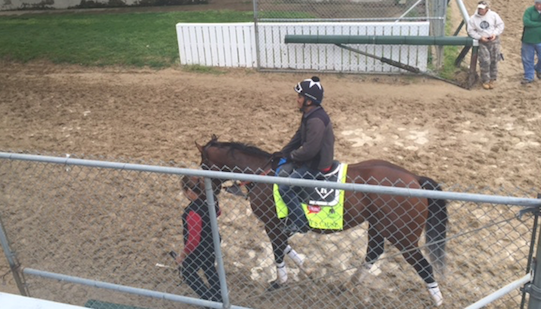 Brody's Cause, winner of the Blue Grass Stakes, will work at Churchill Downs Saturday.