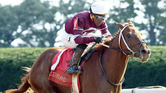Gun Runner is a top contender in Kentucky Derby 142. (Photo by ThreeChimneys.com)