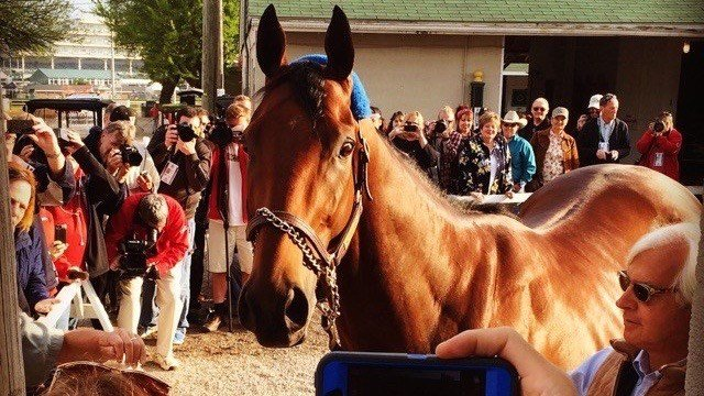 American Pharoah after winning the 2015 Kentucky Derby. (WDRB photo by Eric Crawford)