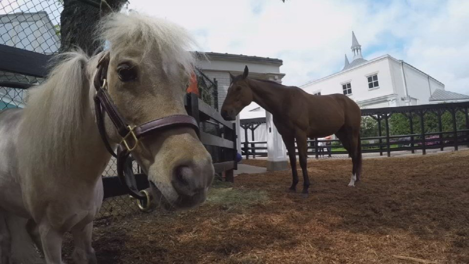 Winston the mini horse lived at the Ky. Derby Museum nearly 23 years.