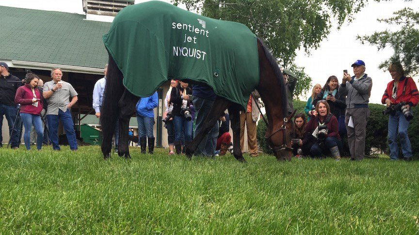 Nyquist doesn't mind the cameras as he grazes outside his barn the morning after winning the Kentucky Derby. (WDRB photo by Eric Crawford)