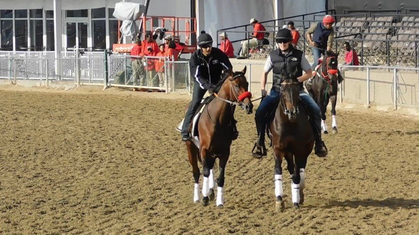 Nyquist (left) makes his final jog around the Pimlico track before Saturday's Preakness Stakes (WDRB photo by Eric Crawford)
