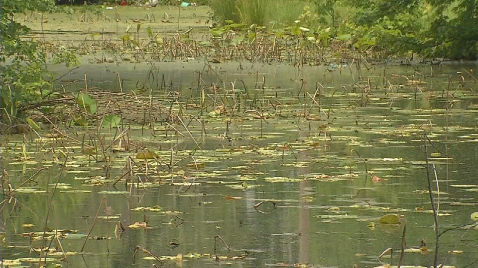 The pond at Chickasaw Park is polluted