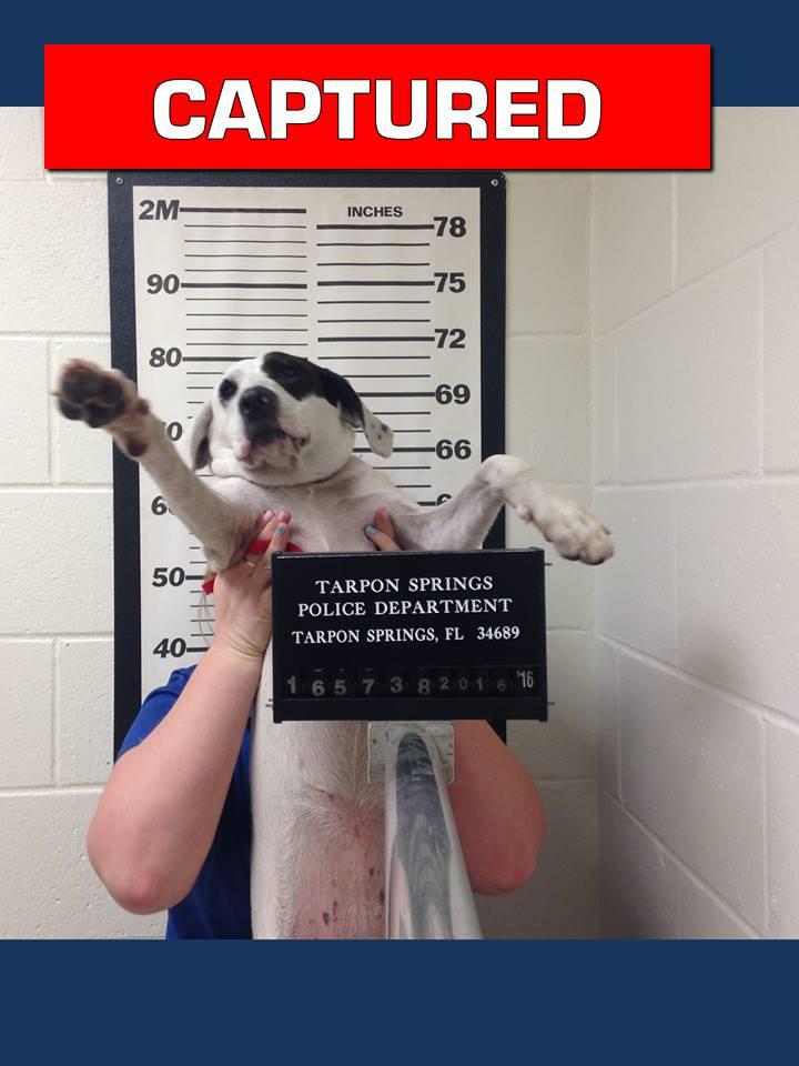 Photo courtesy: Tarpon Springs Florida Police Facebook page