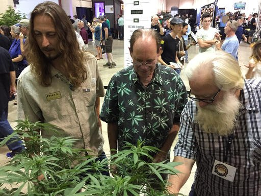 (AP Photo/Gillian Flaccus, File). FILE - In this Saturday, Aug. 13, 2016 file photo, judges rate marijuana plants at the Oregon Cannabis Grower's Fair marijuana plant competition in Salem, Ore.