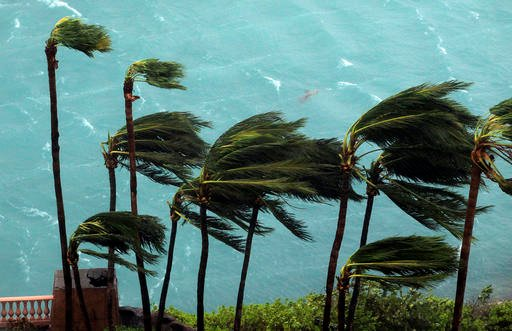 (AP Photo/Tim Aylen). Wind brought by Hurricane Matthew blow palm trees on Paradise Island in Nassau, Bahamas, Thursday, Oct. 6, 2016.