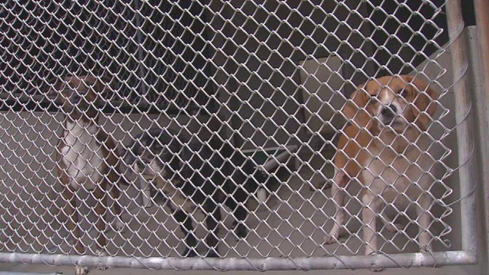 File photo of dogs at LMAS shelter
