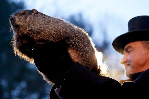 (AP Photo/Keith Srakocic). In this Feb. 2, 2016, photo, Groundhog Club handler John Griffiths holds Punxsutawney Phil, the weather predicting groundhog, during the annual celebration of Groundhog Day on Gobbler's Knob in Punxsutawney, Pa.