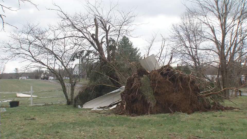 Tree down in Austin.