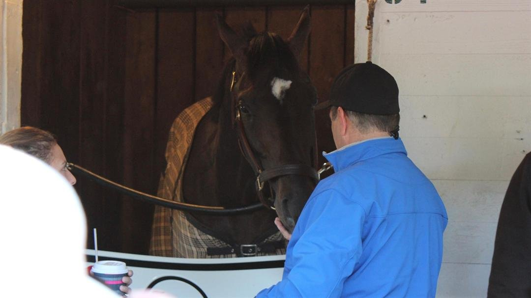 Co-owner Anthony Bonomo has a treat for Always Dreaming the morning after winning the Kentucky Derby. (WDRB photo by Eric Crawford)