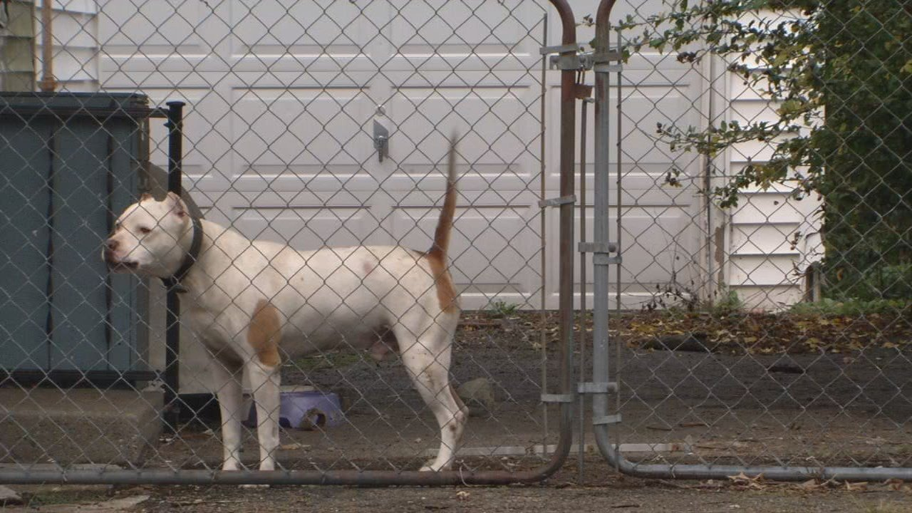A dog stands guard outside his home in a high-bite neighborhood.