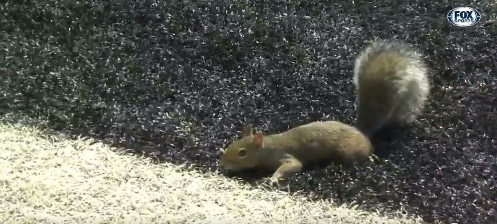 Rambling 42 yards for a second quarter touchdown, this squirrel outran the Kent  State offense during Louisville's victory Saturday.