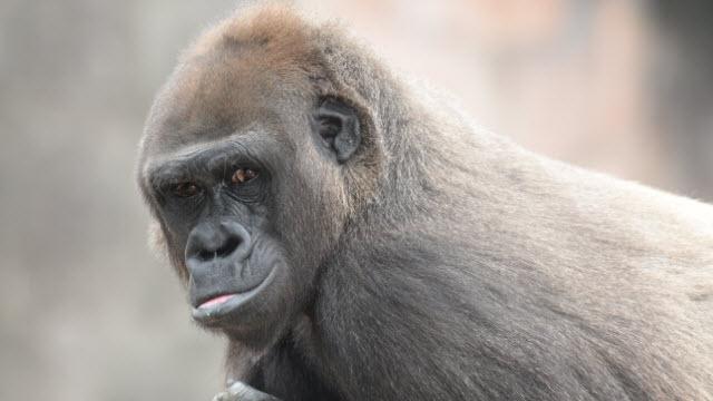 Bandia (source: The Louisville Zoo)
