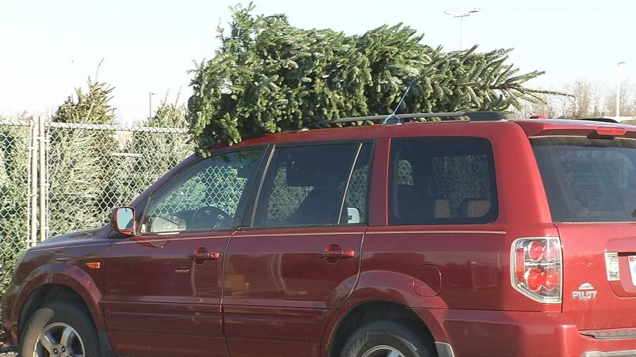 Get your Christmas tree cutting permits