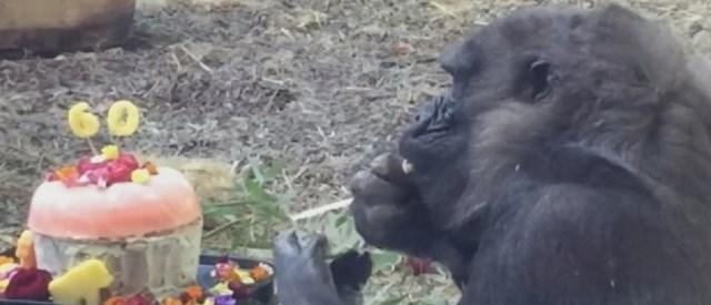 (Image Courtesy: Louisville Zoo)