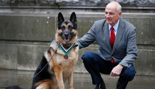 (AP Photo/Kirsty Wigglesworth). John Wren from New York, was 4 years old when Chips the family pet dog returned from the war effort. Military working dog Ayron, seen here, received the award on Chips' behalf.