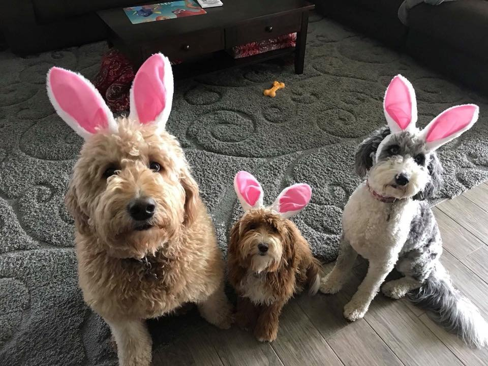 Rusty, Sara and Misty are celebrating National Puppy Day and Easter!