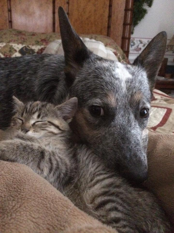 Nine-month old Blu is snuggling with her pet kitten Pearl