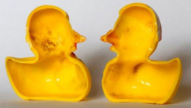 Scientists have the dirt on the rubber ducky: Those cute yellow bath-time friends are, as some parents have long suspected, a haven for nasty bugs.