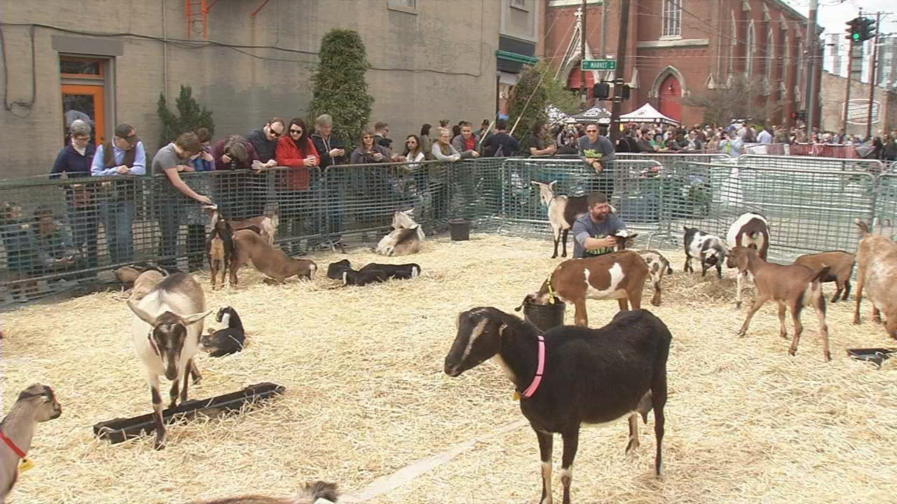 It was all about goats and beer in NuLu Saturday afternoon.