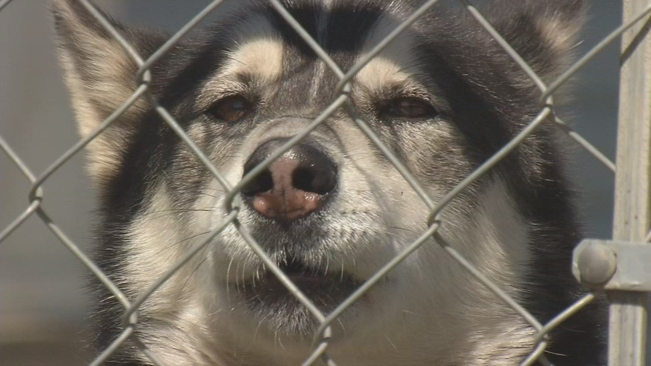 Louisville ranks in the top ten cities for dog attacks on postal carriers.