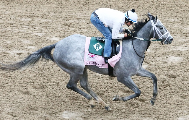 My Miss Lilly is the only gray in the Oaks field. (courtesy Coady Photography)