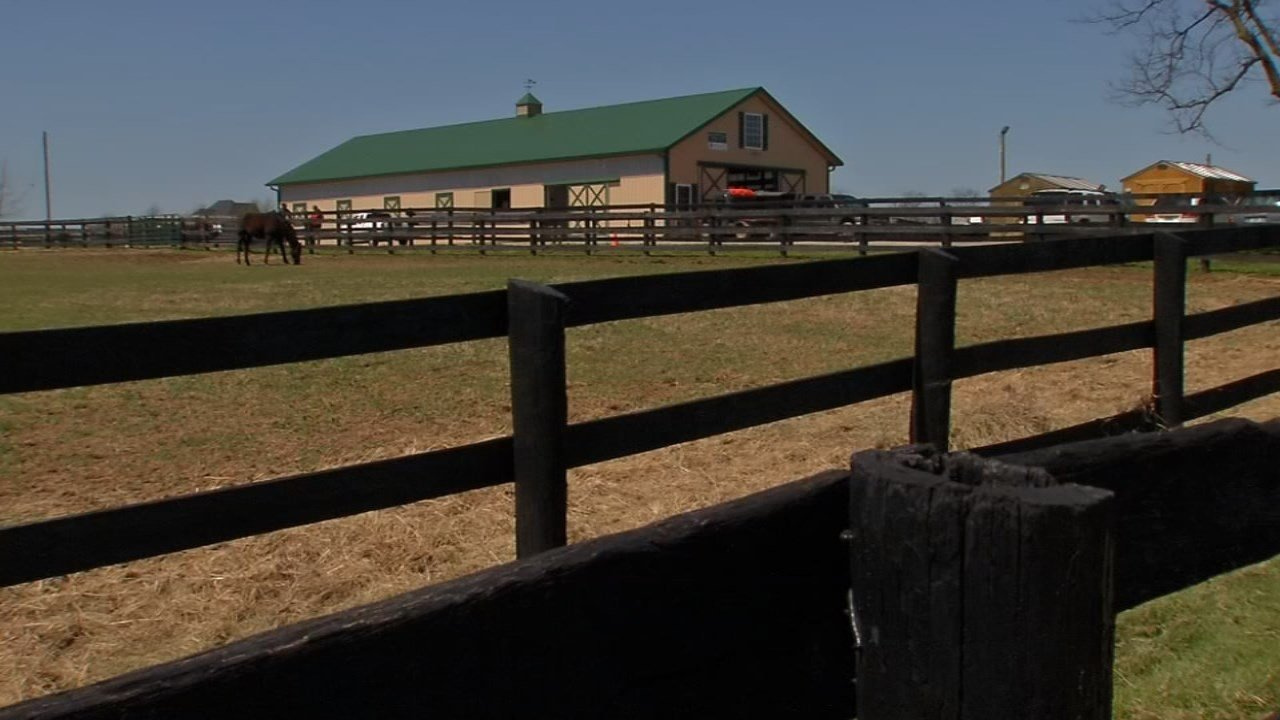 Old Friends Farm is a peaceful place for retired thoroughbreds to live out their years.