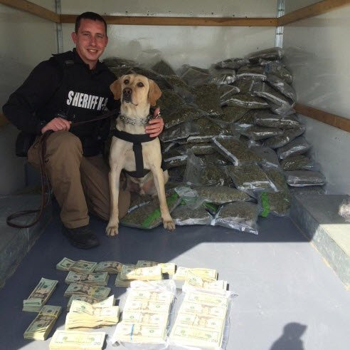 Police seized more than $600,000 and 878 pounds of pot, along with meth, cash and guns in Bullitt County.