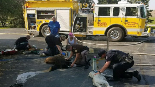 "First responders used donated ""pet masks"" to revive seven Labradors overcome by smoke in Porter County, Indiana."