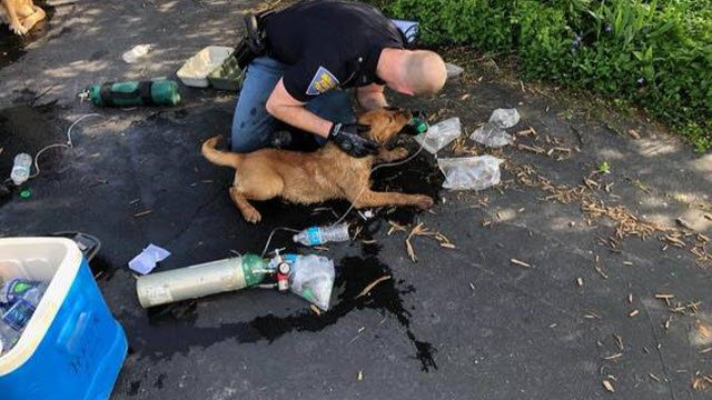 An Indiana State Trooper administers first aid to a Labrador rescued from a burning home in Porter County, Indiana, on May 8, 2018.