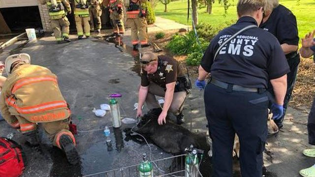 Seven dogs overcome by smoke in a house fire in Porter County, Indiana, were taken to animal hospitals in police cars on May 8, 2018.