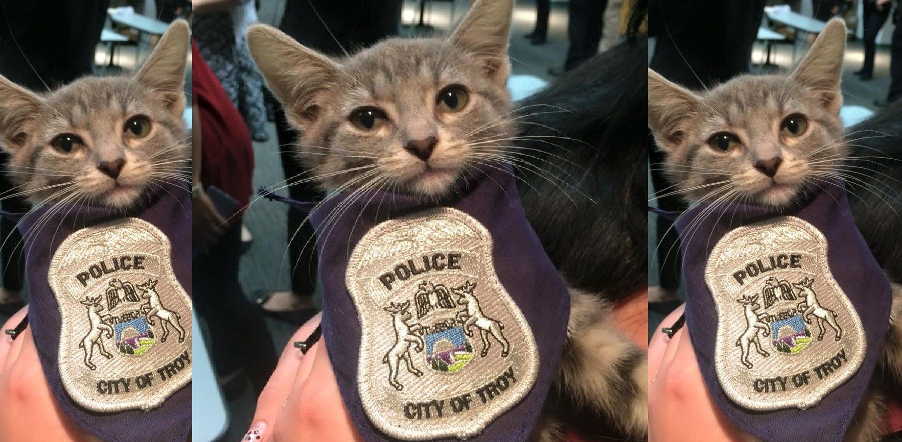 """Pawfficer Donut"" is the newest edition to the Troy, Michigan Police Department."