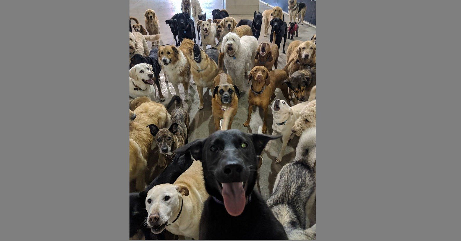 A doggie daycare near Cincinnati snapped a photo that looks like the best dog selfie ever!