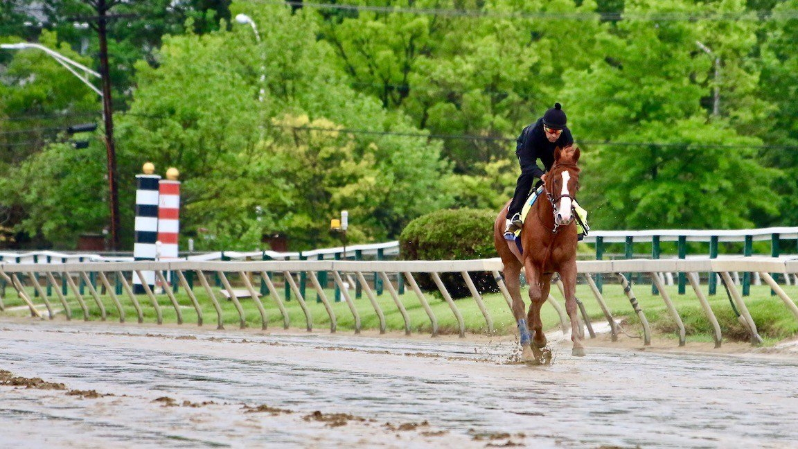 Kentucky Derby winner Justify makes his first appearance on the track at Pimlico prior to Saturday's Preakness Stakes. (WDRB photo by Eric Crawford)