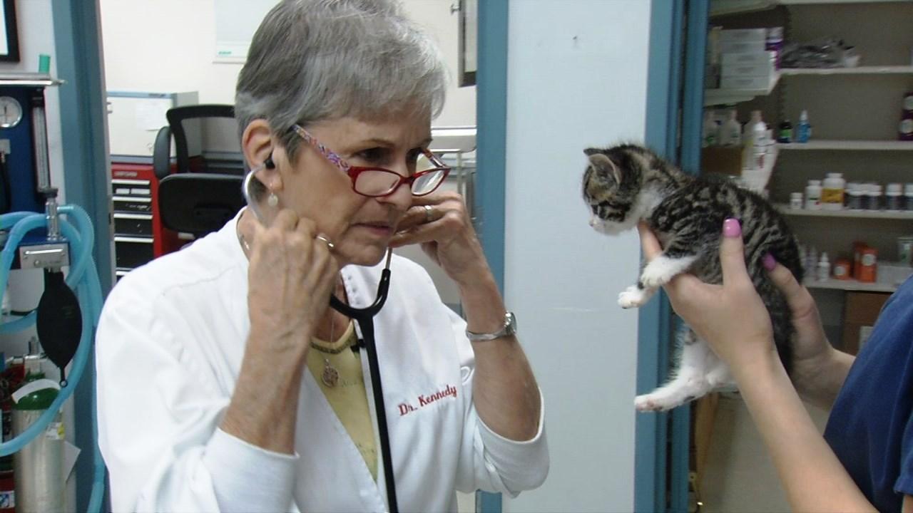Patricia Kennedy, DVM, owns Jefferson Animal Hospital in Louisville.