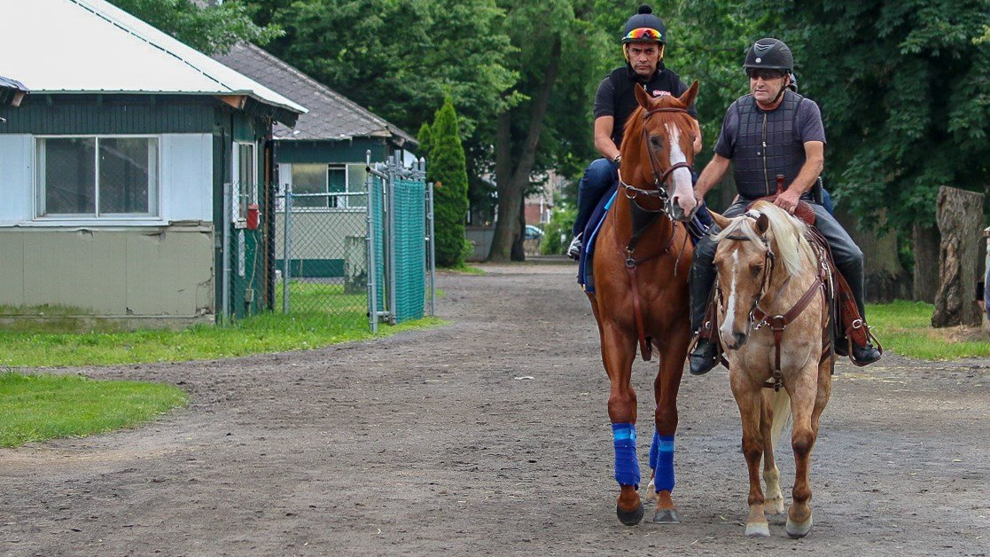 Justify, with exercise rider Humberto Gomez and held by assistant trainer Jimmy Barnes, walks to the track at Belmont Park. (WDRB photo by Eric Crawford)