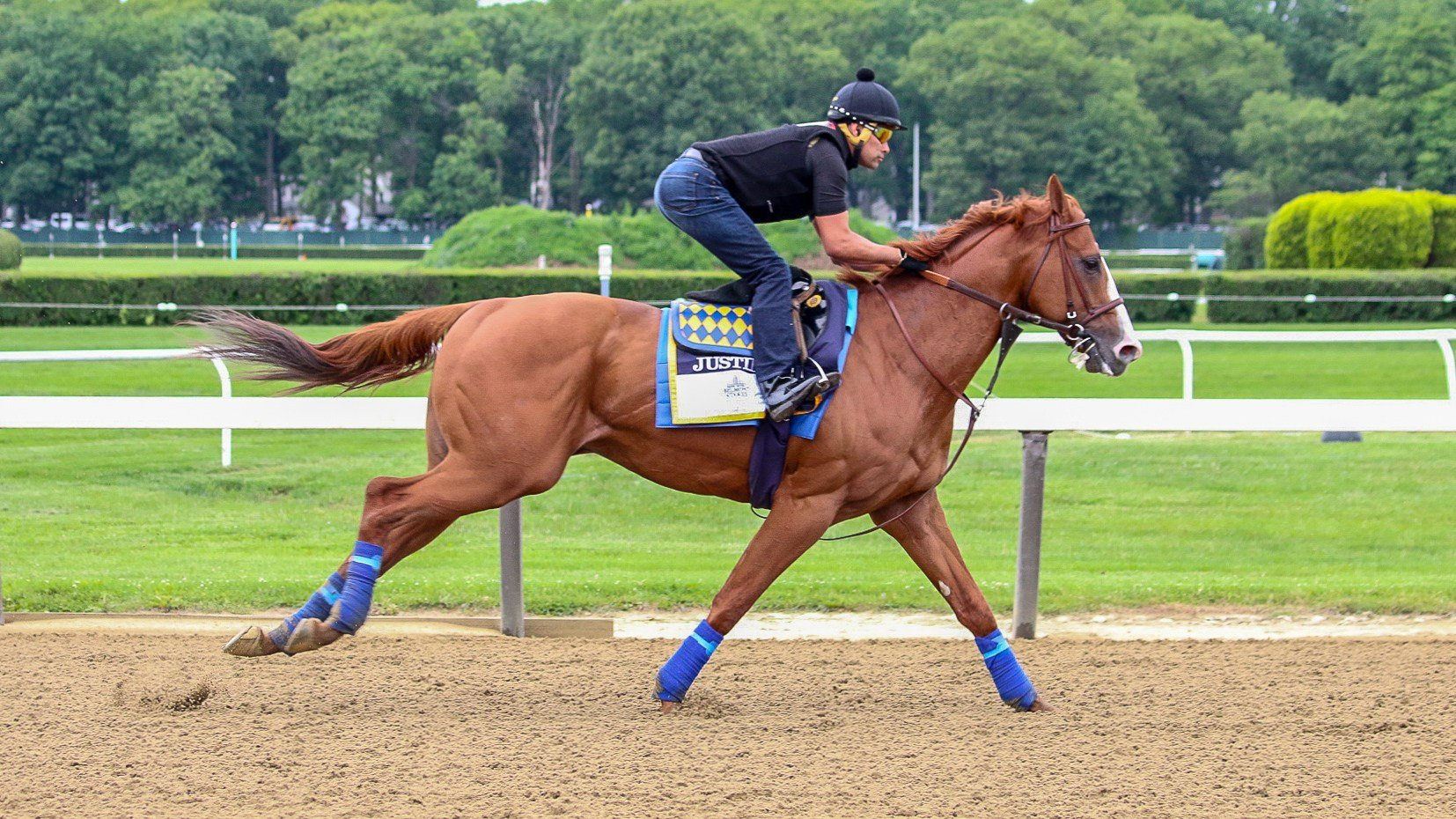 Justify on the track at Belmont training for his run at a Triple Crown Saturday. (WDRB photo by Eric Crawford)