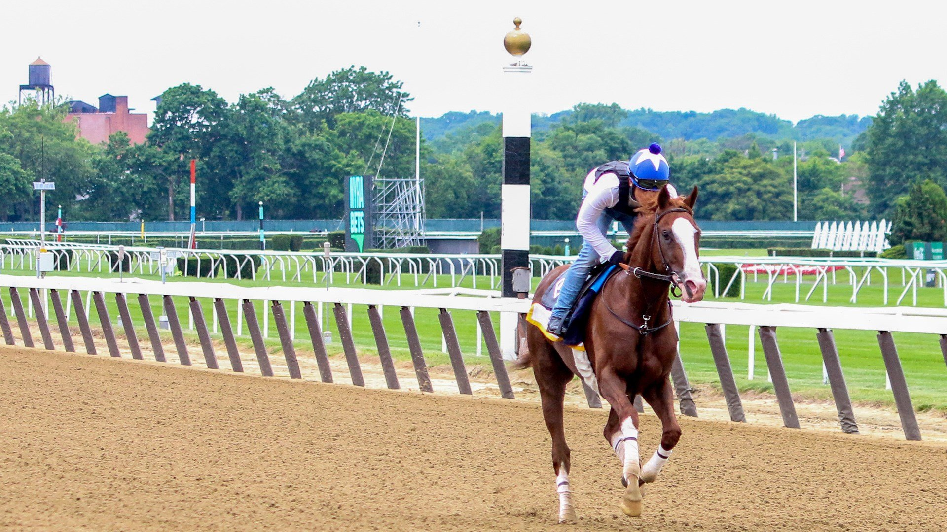 Free Drop Billy on the track at Belmont Park. (WDRB photo by Eric Crawford)