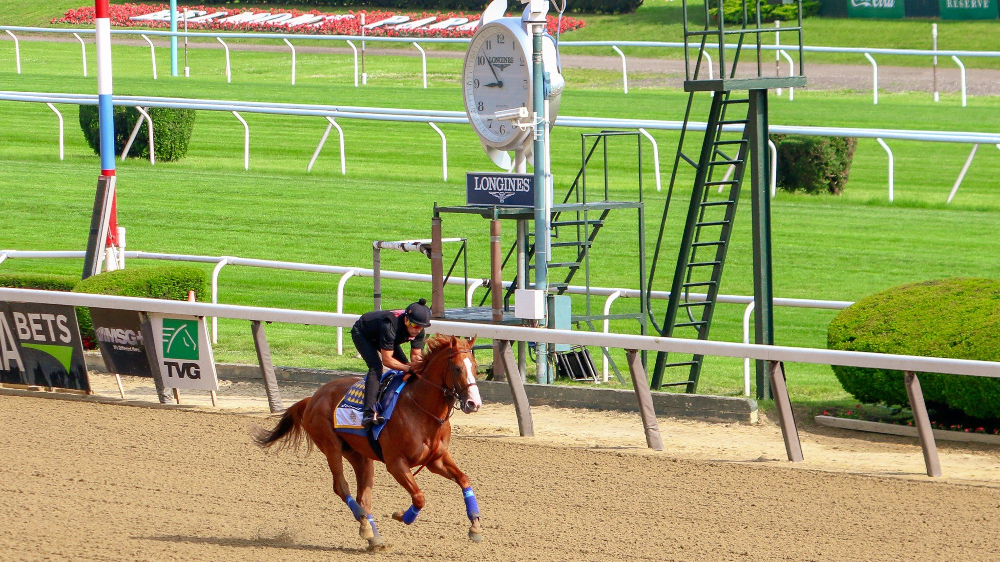 Justify galloped past the big clock and the finish line during his final pre-Belmont gallop at Belmont Park. (WDRB photo by Eric Crawford)