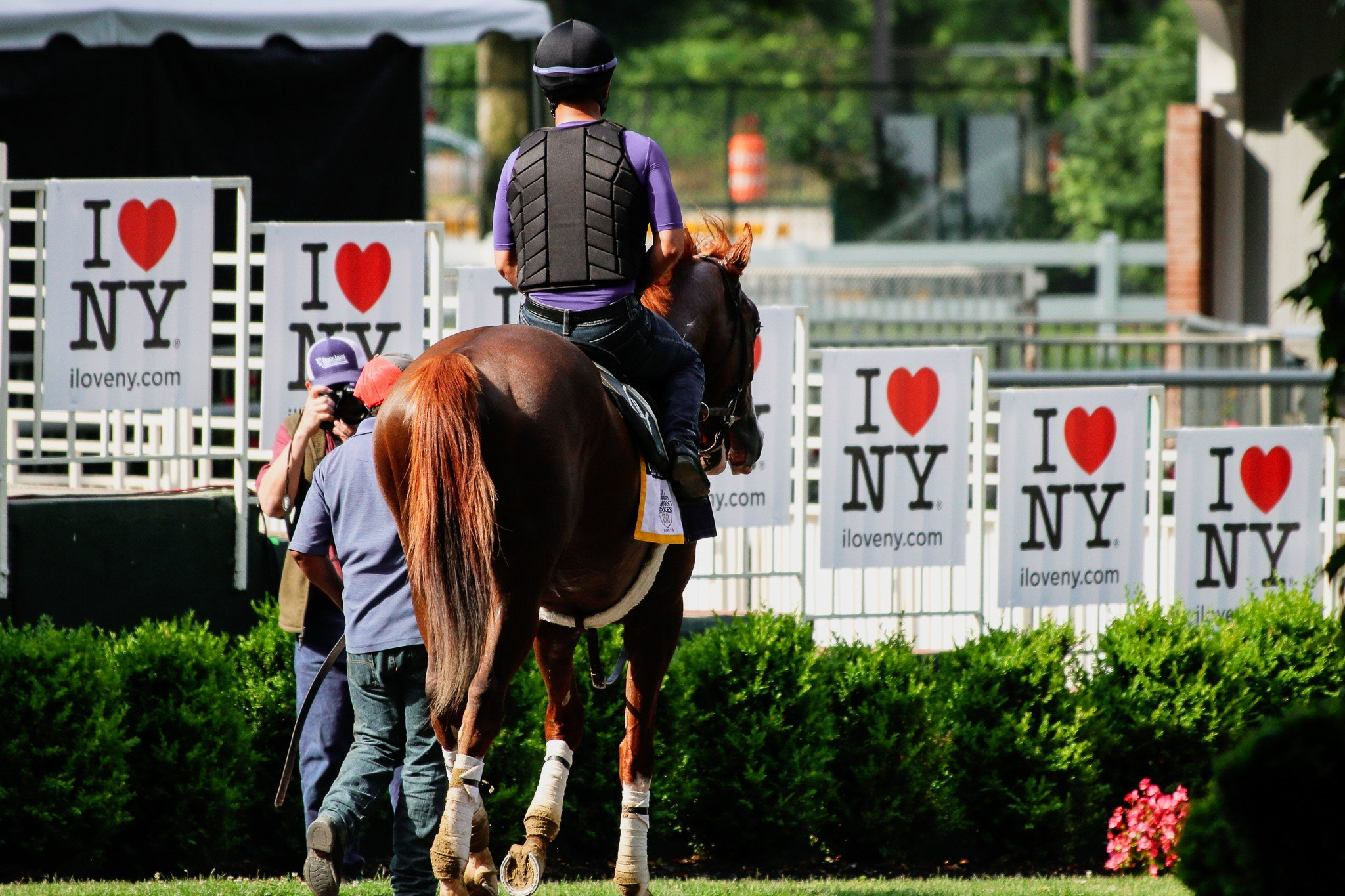 Dale Romans' Free Drop Billy heads to the paddock on Friday at Belmont Park. (WDRB photo by Eric Crawford)