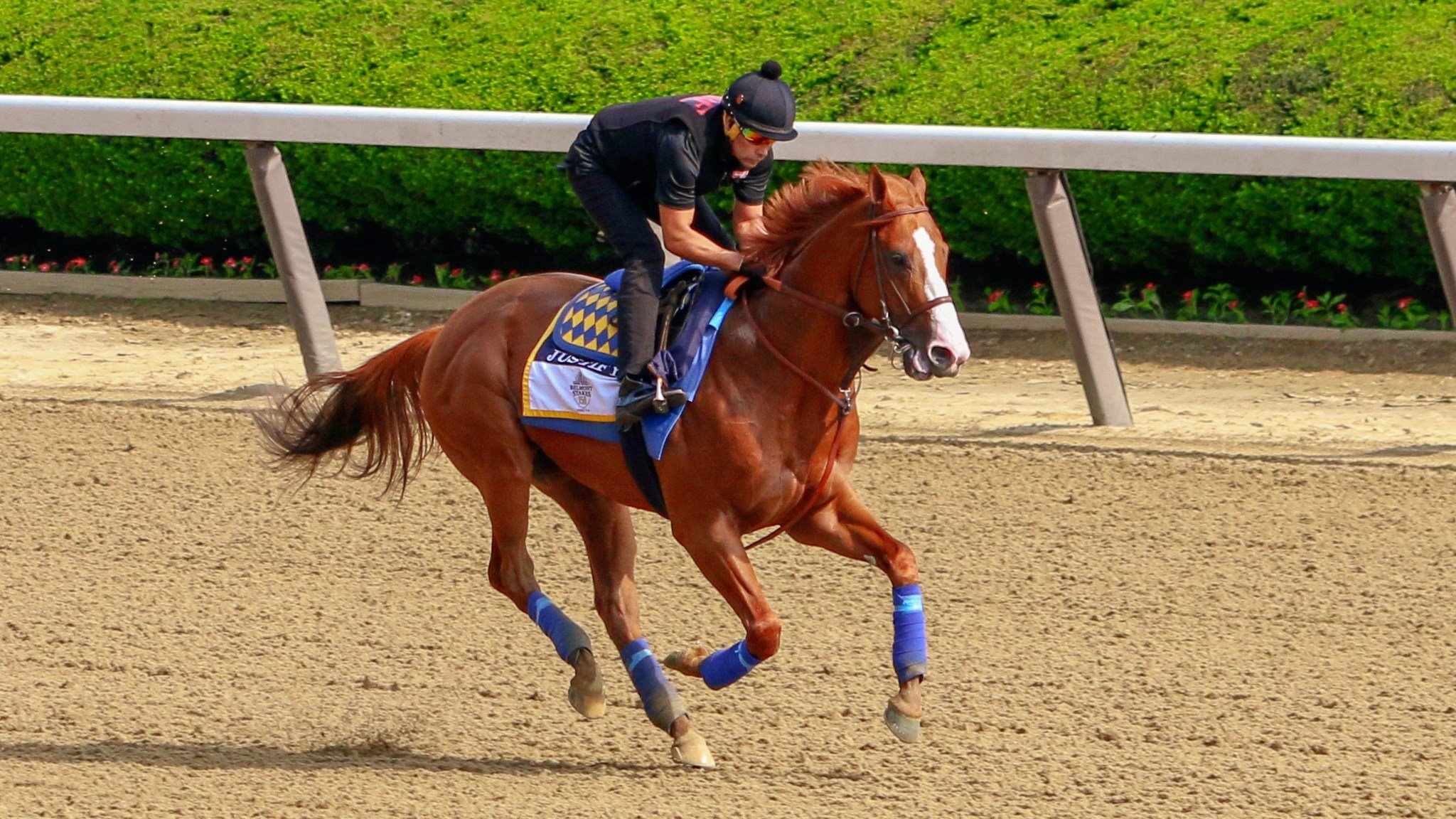Justify concludes his final pre-Belmont gallop on Friday. (WDRB photo by Eric Crawford)