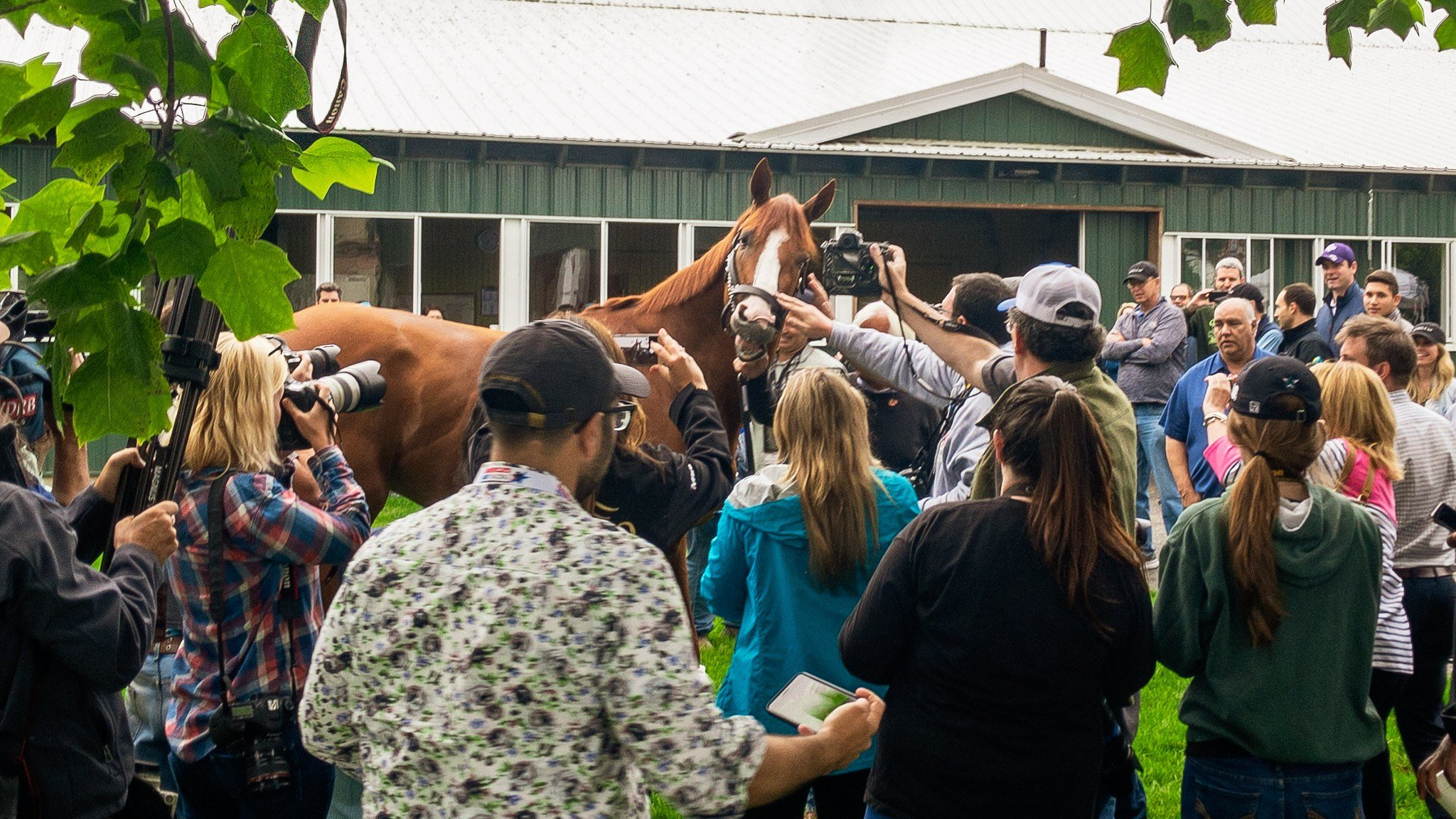 Triple Crown winner Justify gets up close with reporters and photographers on Sunday morning. (WDRB photo by Eric Crawford)