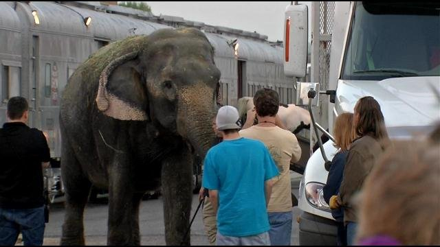 Workers walk an elephant from the circus train on West Broadway to prepare for a walk several blocks to the downtown arena, where the circus will play through Sunday.