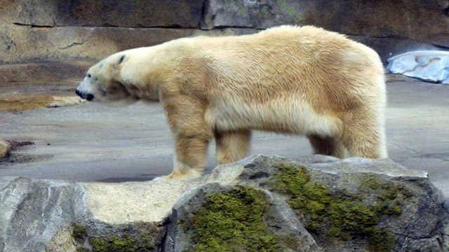 Arki, the oldest polar bear at the Louisville Zoo, died on Thursday.  The zoo says it has to wait on a necropsy before it can provide more details.