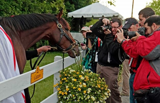 Orb poses for pictures outside the stakes barn at Pimlico before Saturday's 138th Preakness Stakes.
