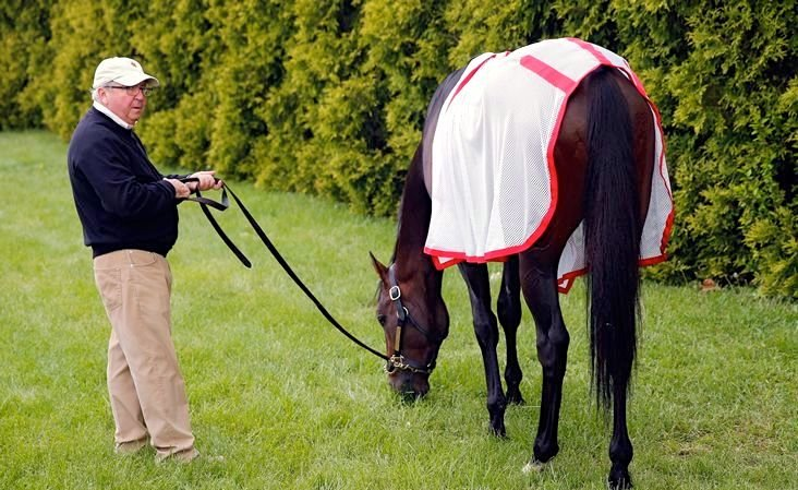 Trainer Shug McGaughey believes that Orb, his Kentucky Derby winner, is primed to run another big race in the Preakness Saturday.