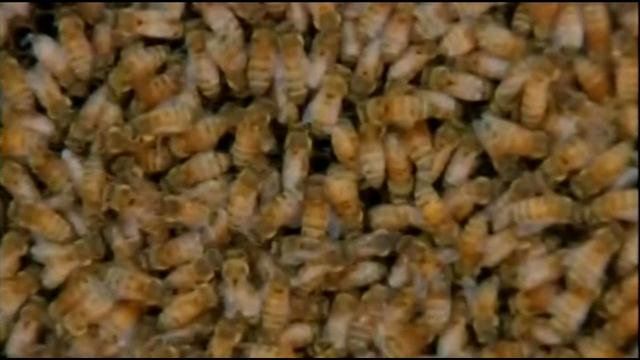 A bee keeper removed the bees and took them to safety.