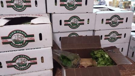 Grasshoppers produce boxes