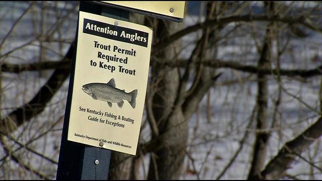 A special license is required on top of a regular fishing license to keep trout.