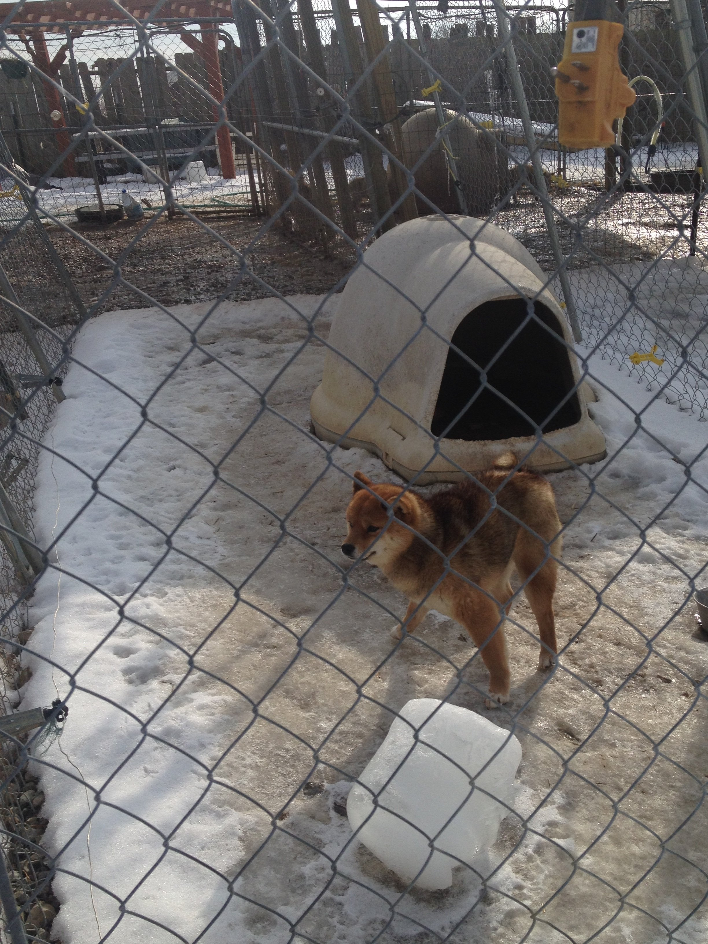 A petition urging the closure of Kev-Lar Kennels says ice covers the ground in kennels